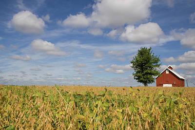 Photograph - Crisp Air Bean Farm by Dylan Punke