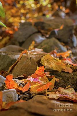 Photograph - Crisp Days Of Fall by Susan Warren