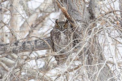 Frank Sinatra - Cross Eyed Great Horned Owl by Tony Hake