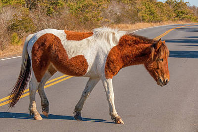 Photograph - Crossing The Road At Assateague by Kristia Adams
