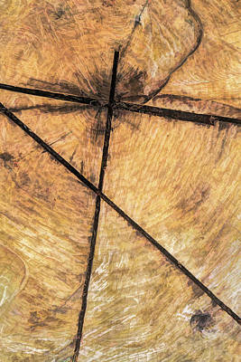 Photograph - Crossroads On The Tree Stump by Gary Slawsky