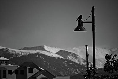Photograph - Crow Post by Will Campbell