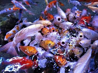 Animals Royalty-Free and Rights-Managed Images - Crowd of hungry gold fish by Victoria Beasley