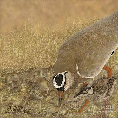 Digital Art - Crowned Plover And Chick by Caroline Street