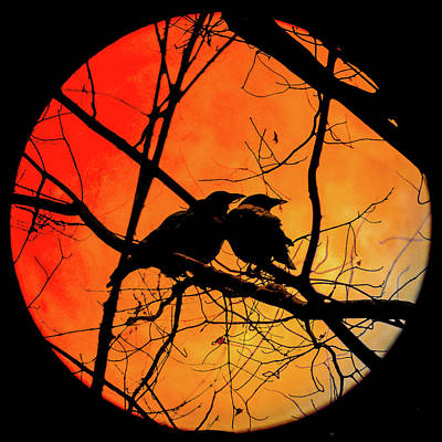 Photograph - Crows Moon by Bob Orsillo