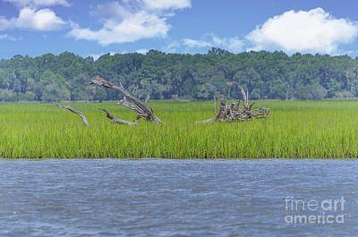 Photograph - Cruising The Icw - Dead Wood by Dale Powell