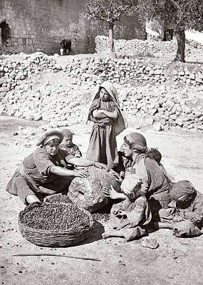 Photograph - Crushing Olives In Palestine by Munir Alawi
