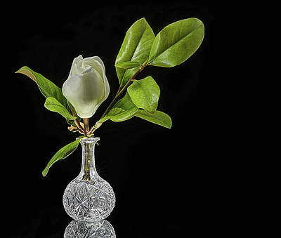 Photograph - Crystal And Magnolia Still Life by JC Findley