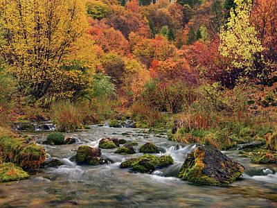 Photograph - Cub River Autumn by Leland D Howard
