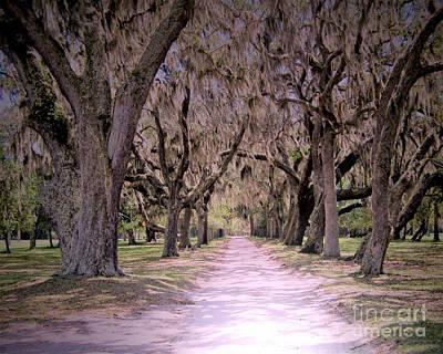 Photograph - Cumberland Fairytale Lane by Kristen Abrahamson