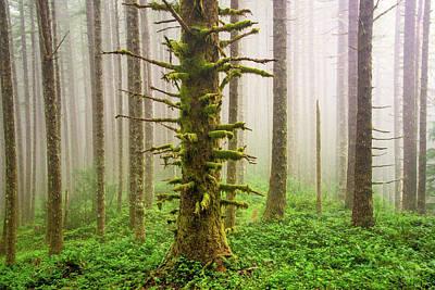 Photograph - Cummins Wilderness Area by Leland D Howard