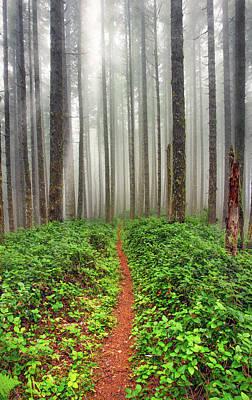 Photograph - Cummins Wilderness Hike by Leland D Howard