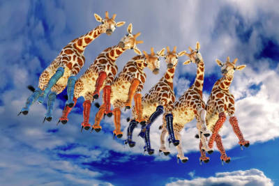 Surrealism Royalty-Free and Rights-Managed Images - Curious Giraffes  by Betsy Knapp