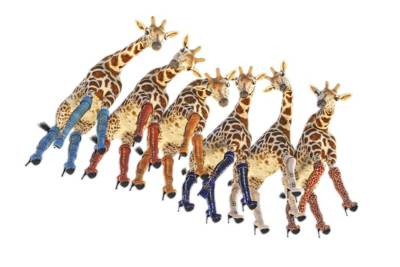 Surrealism Royalty-Free and Rights-Managed Images - Curious Giraffes PNG by Betsy Knapp
