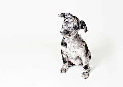 Dog Wall Art - Photograph - Curious Puppy by Chad Latta