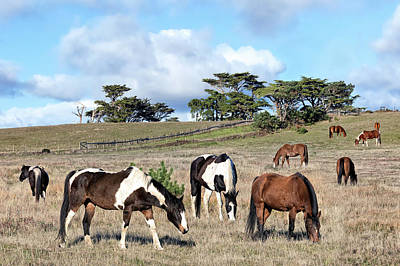 Photograph - Curly Lane Horses Grazing by Kathleen Bishop