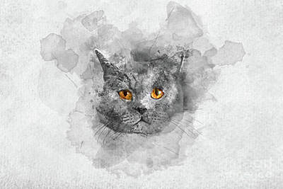 Watercolor Pet Portraits Photograph - Cute British Shorthair Cat's Watercolor Portrait. by Michal Bednarek