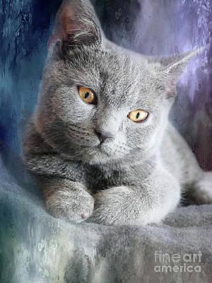 Chartreux Wall Art - Photograph - Cute Chartreux Kitten by Elisabeth Lucas