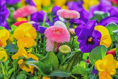 Photograph - Cute Flowers  by Top Wallpapers