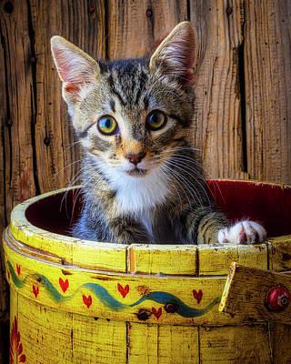 Photograph - Cute Kitten In Yellow Bucket by Garry Gay