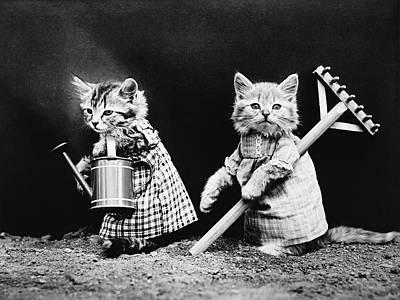Priska Wettstein Pink Hues - Cute Kittens Gardening - Harry Whittier Frees by War Is Hell Store