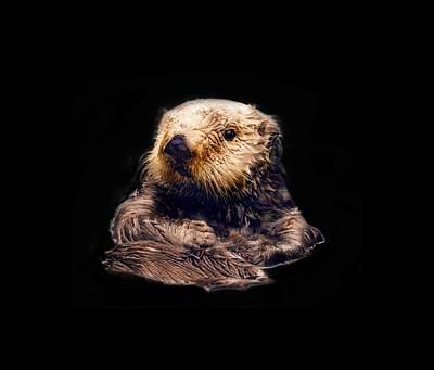 Photograph - Cute Sea Otter by Jean Noren