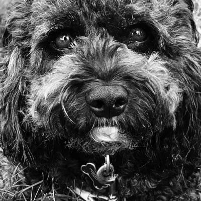 Cindy Digital Art - Cutest Dog On The Planet by Cindy Greenstein
