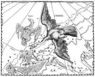 Drawing - Cygnus, Boreal Constellation Of Swan Or Northern Cross by Johann Hevelius