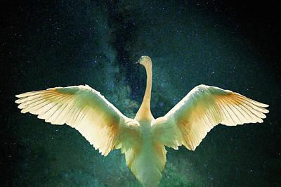 Digital Art - Cygnus by Helen White