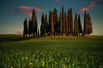Photograph - Cypress Circle by Chris Lord