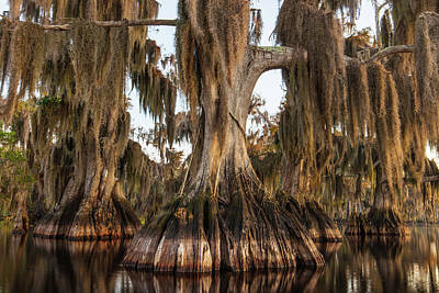 Photograph - Cypress Giants In Autumn Shroud by Stefan Mazzola