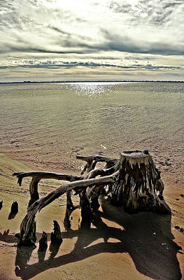 Photograph - Cypress On The Beach by Maggy Marsh