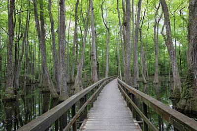 Photograph - Cypress Swamp Boardwalk by Susan Rissi Tregoning