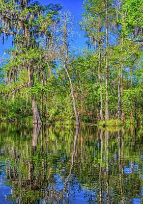 Mellow Yellow - Cypress Swamp by Steve Harrington
