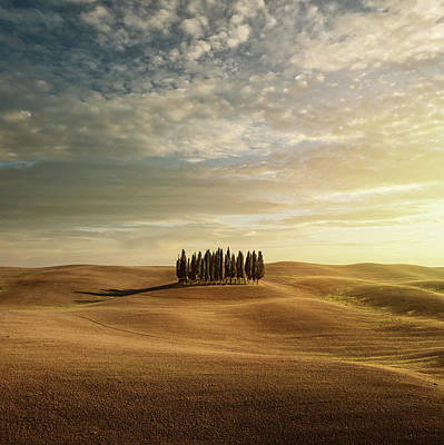 Field Photograph - Cypress Trees In Tuscany by Peter Zelei Images