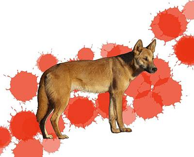 Child Wall Art - Digital Art - D Is For Dingo by Joan Stratton