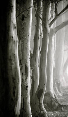 Photograph - D0805 - Gumtrees by Dawid Theron