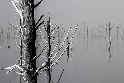 D1095 - Theewaterskloof Trees Art Print