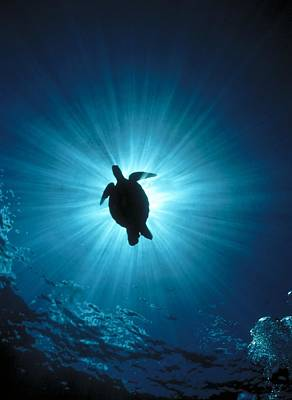 Photograph - D974 Silhouette Of A Sea Turtle by Stein,erik