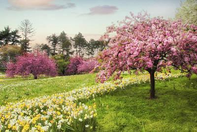 Photograph - Daffodil Heaven by Jessica Jenney