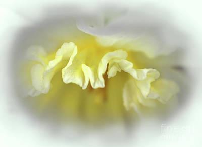 Photograph - Daffodil Ruffle by Karen Adams