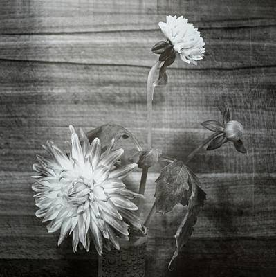 Photograph - Dahlia Grouping by Michelle Calkins