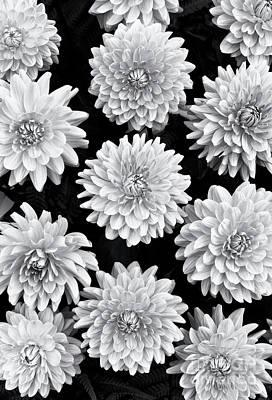 Photograph - Dahlia Renato Tosio Flowers Monochrome by Tim Gainey
