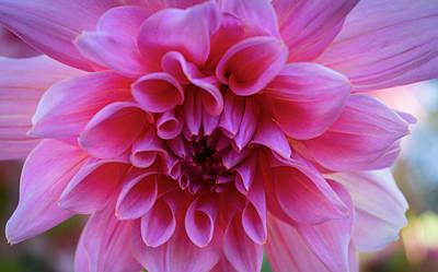Photograph - Dahlia Surprise by Steven Clark