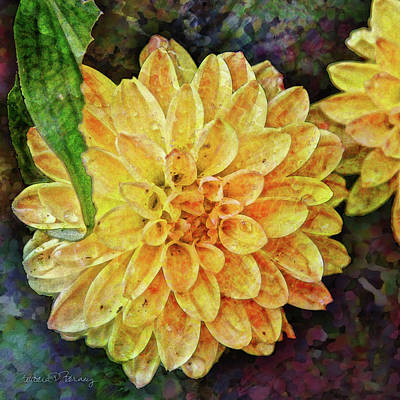 Digital Art - Dahlia With Raindrops by Barbara Berney