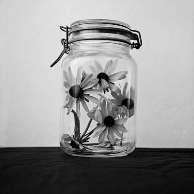 Jar Photograph - Daisies In A Jar by Daniel J. Grenier