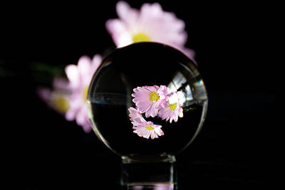Photograph - Daisies In Crystal Ball by Jennifer Wick