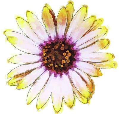 Photograph - Daisy Decal Deco by JAMART Photography