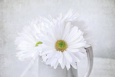 Photograph - Daisy Flowers by Kim Hojnacki