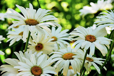 Photograph - Daisy Patch In Shade by Kae Cheatham